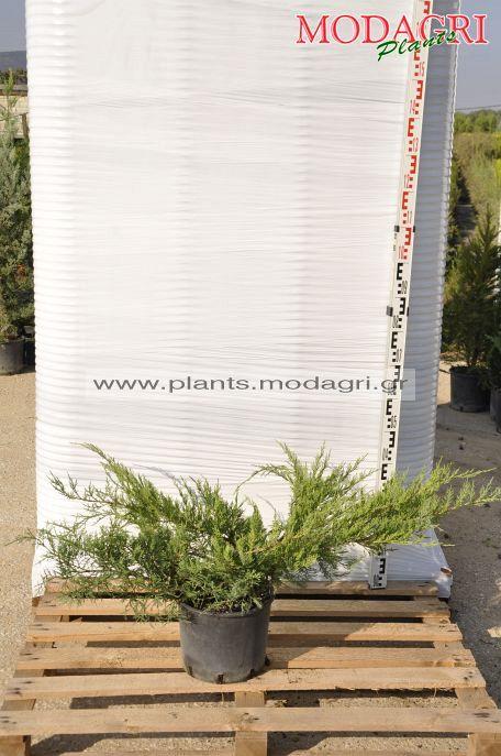 Φυτώριο Modagri Plants - Μόδι Θεσσαλονίκη