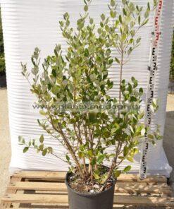 Φυτώριο Μόδι Θεσσαλονίκης - Modagri Plants
