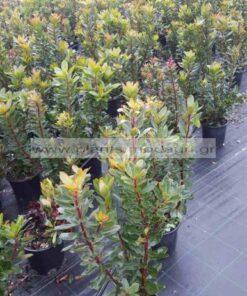 ARBUTUS/UBEDO/MODAGRI/PLANTS